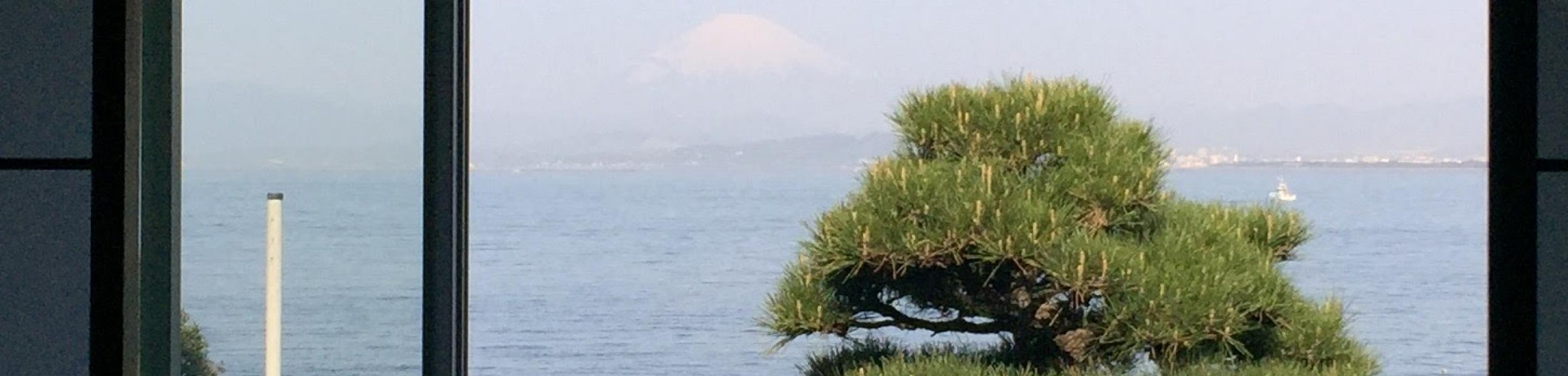 Mount Fuji and a shaped fir tree from within a hotel room in Enoshima Japan, April 2017
